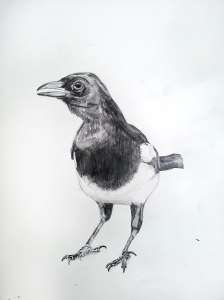 One for Sorrow, 2012, Graphite on Paper, 15x20cm